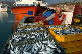 Web stranica za ulov riba